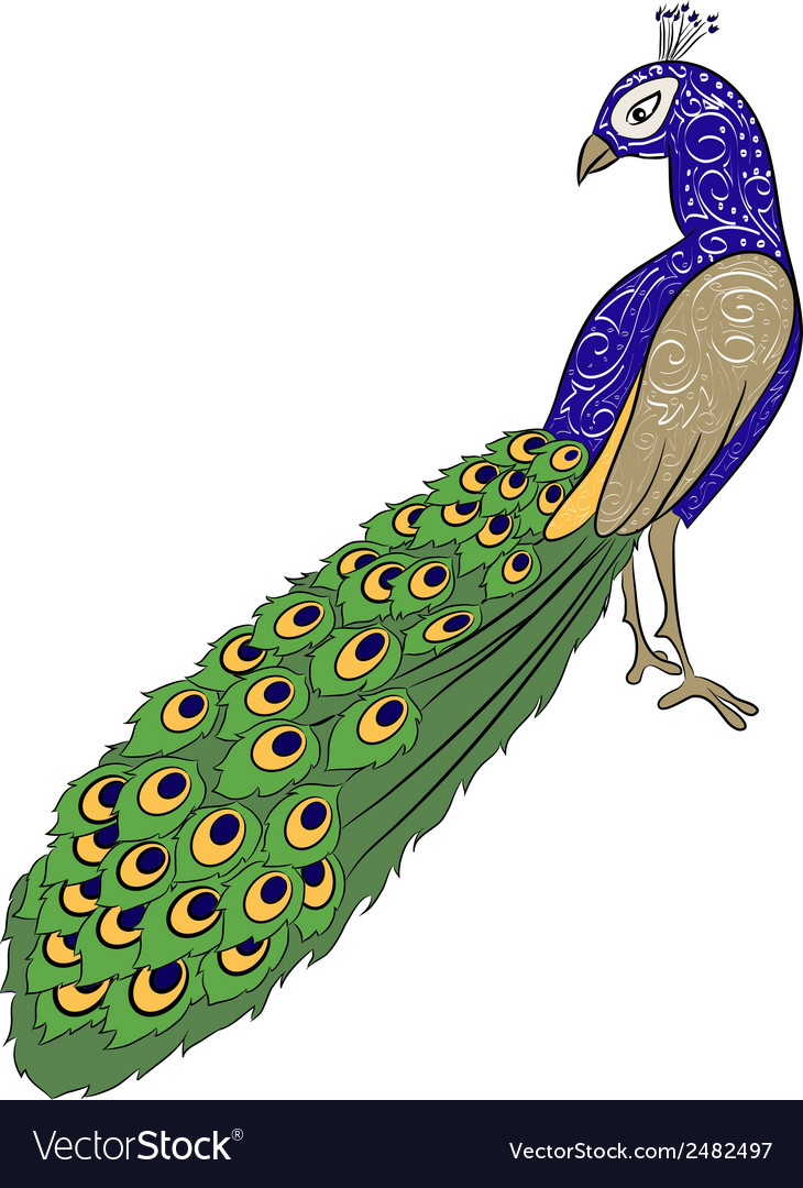 Hand drawing peacock 2 vector | Price: 1 Credit (USD $1)