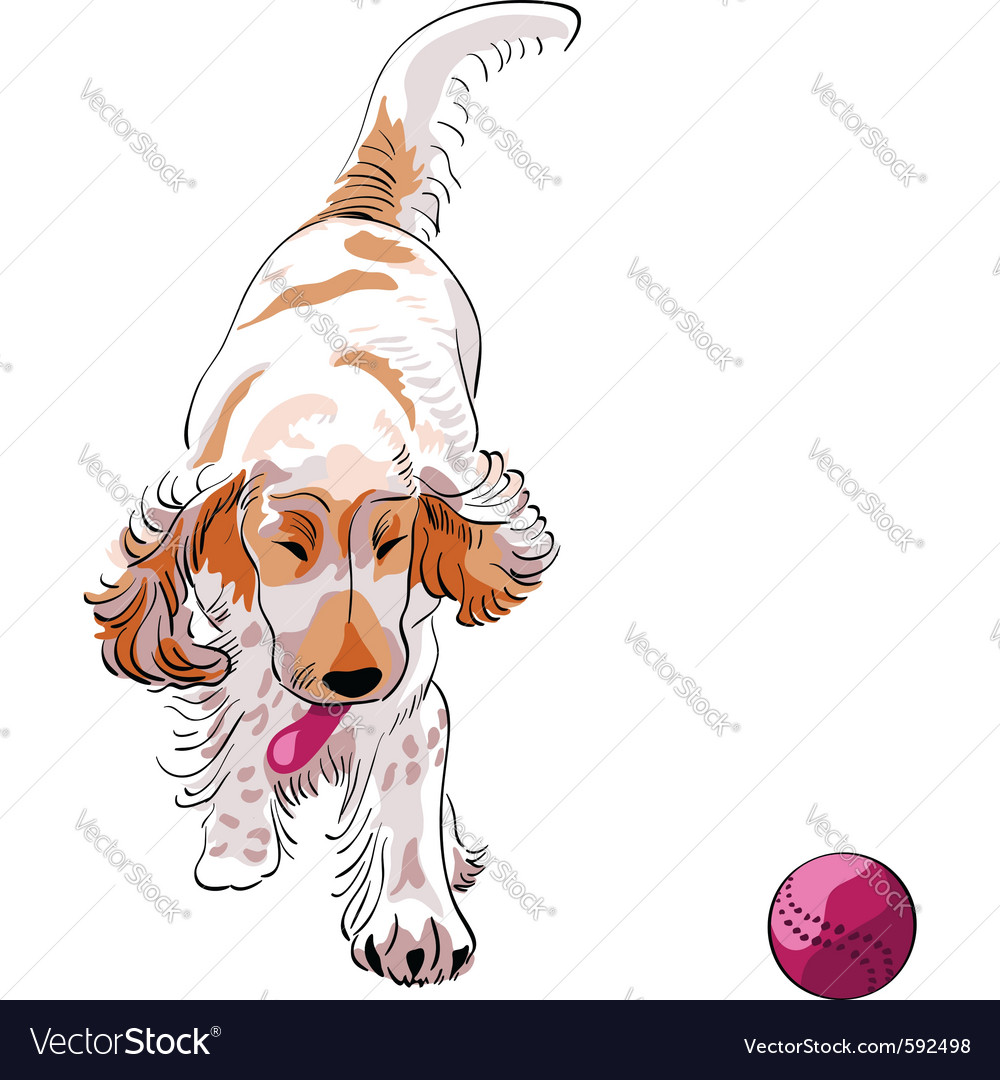Cocker spaniel breed vector | Price: 3 Credit (USD $3)