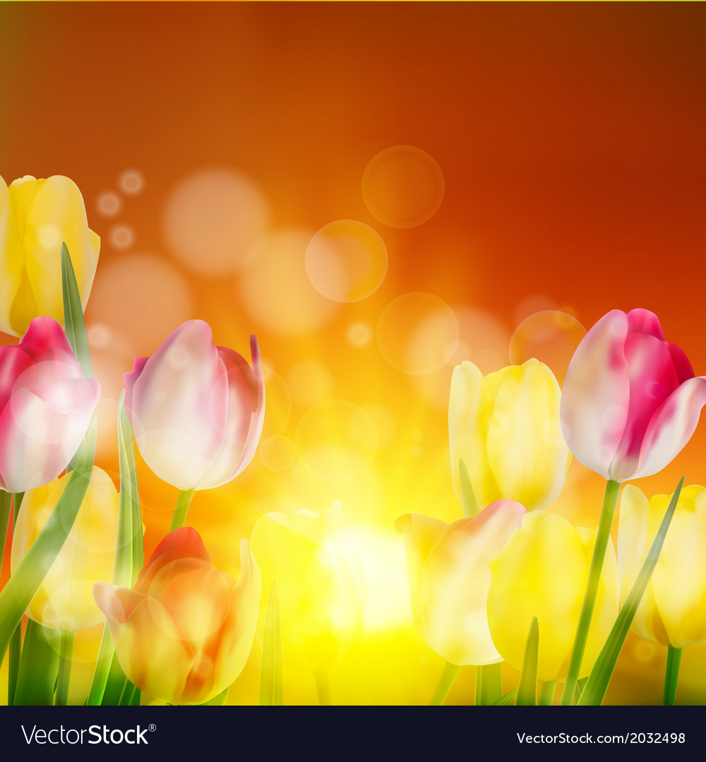 Tulip field under sunset sky eps 10 vector | Price: 1 Credit (USD $1)
