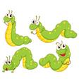 Four green caterpillars vector