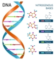 Dna bases poster vector