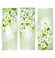 Three banners with blossoming tree branches vector
