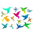 Colorful hummingbird birds vector