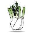 Freehand drawing fennel icon vector
