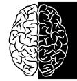 Brain shape vector