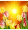 Floral background sunset landscape eps 10 vector