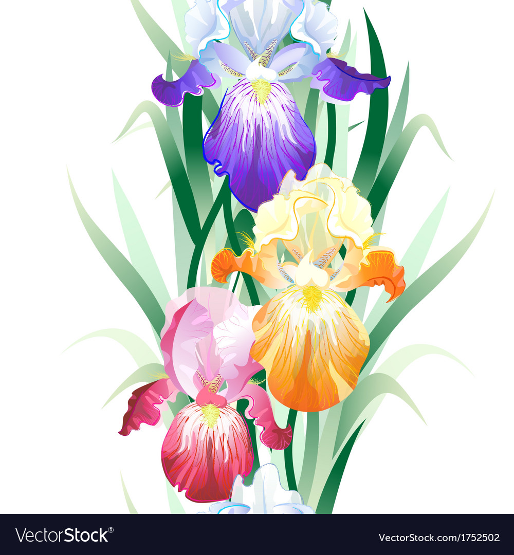Seamless pattern with iris flowers vector | Price: 1 Credit (USD $1)