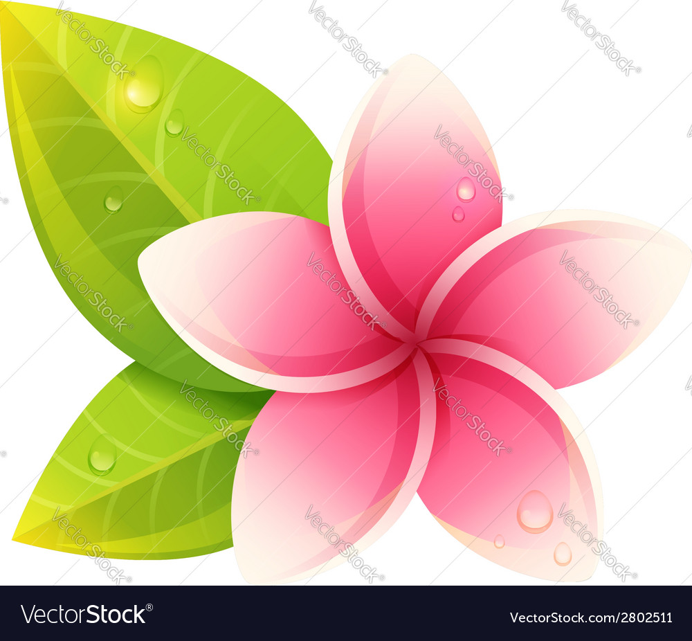 Peaceful and relaxing card with spa flowers vector | Price: 1 Credit (USD $1)