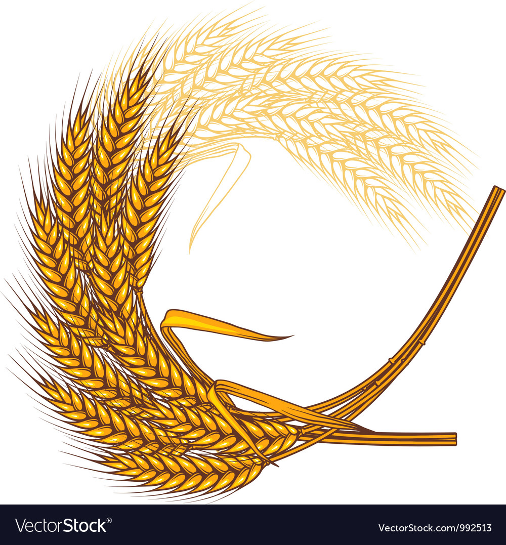 Background with ripe yellow wheat ears vector | Price: 1 Credit (USD $1)