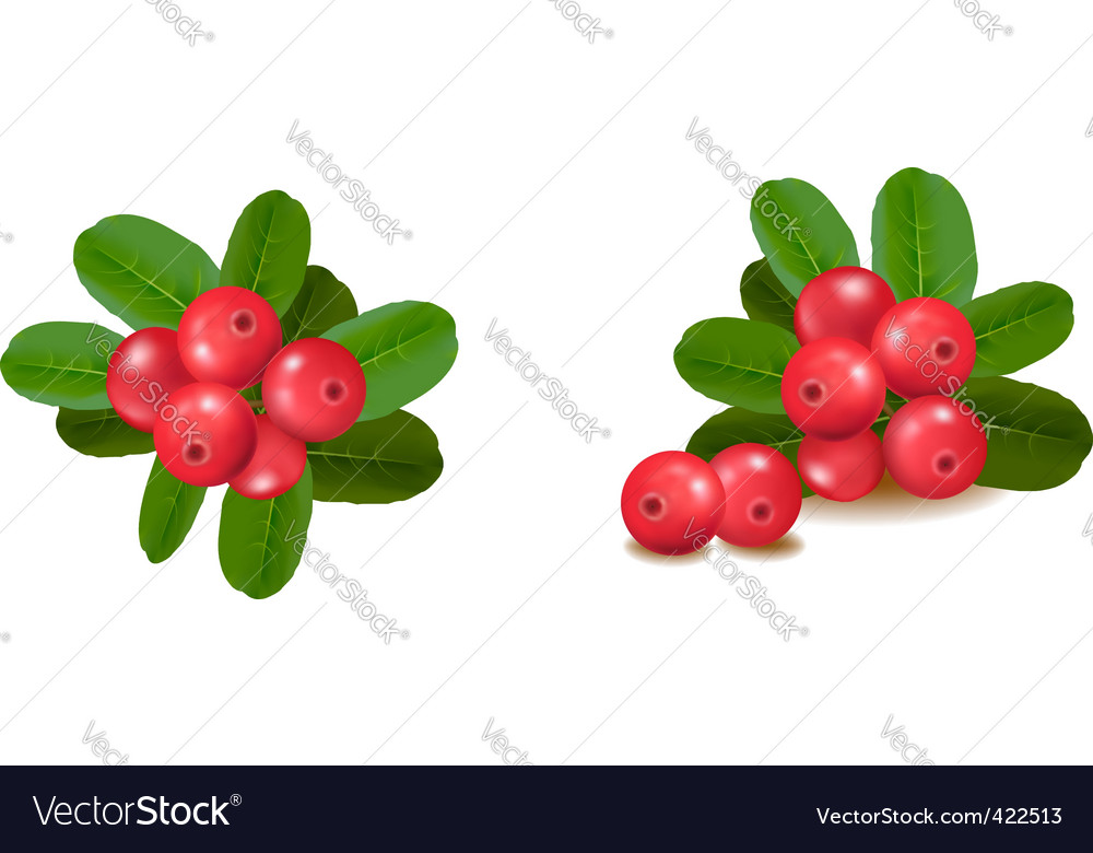 Set of berries vector | Price: 1 Credit (USD $1)