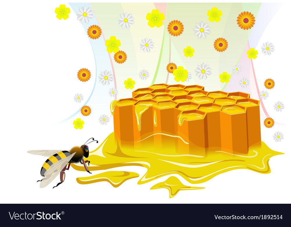 Bee and honeycomb with floral honey vector | Price: 1 Credit (USD $1)
