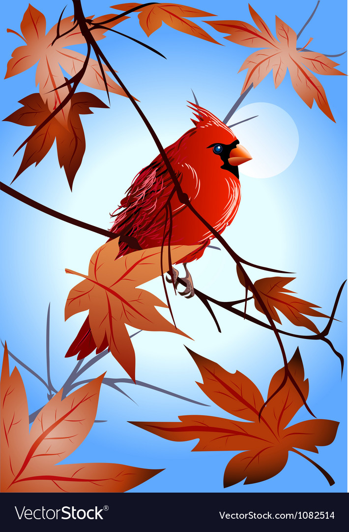 Northern cardinal on the maple branch vector | Price: 3 Credit (USD $3)