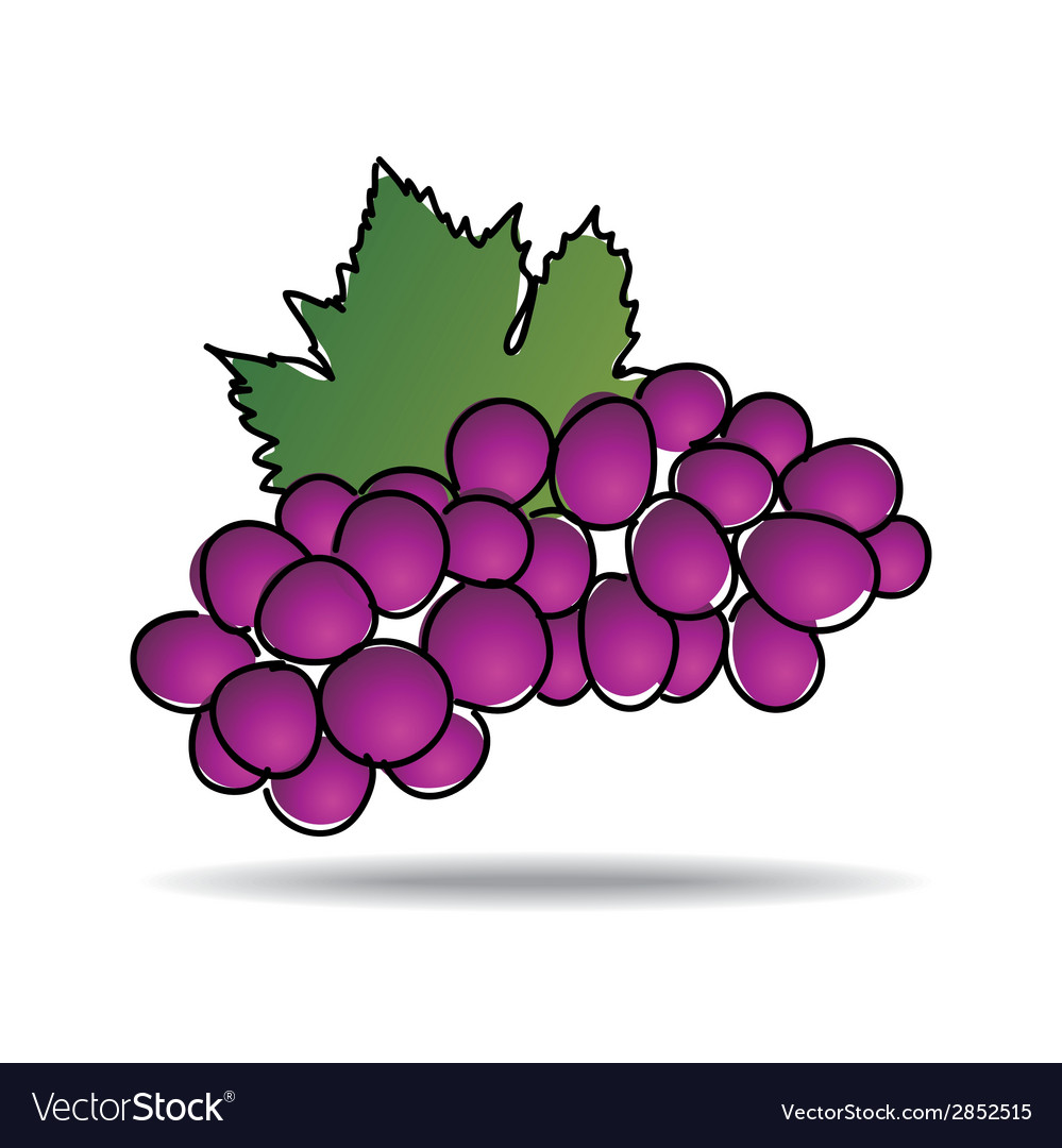 Freehand drawing grape icon vector | Price: 1 Credit (USD $1)