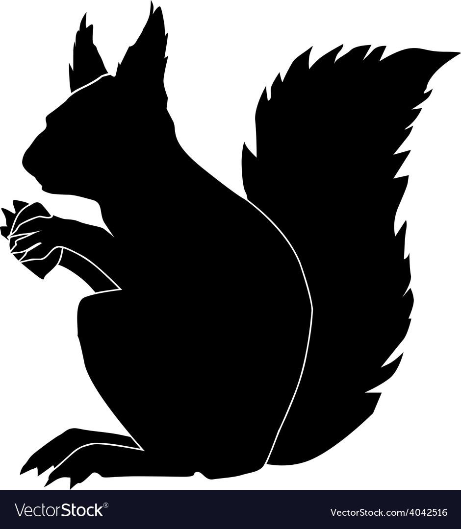 Squirrel vector | Price: 1 Credit (USD $1)