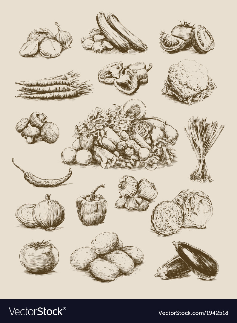 Hand drawn vegetables set vector | Price: 1 Credit (USD $1)