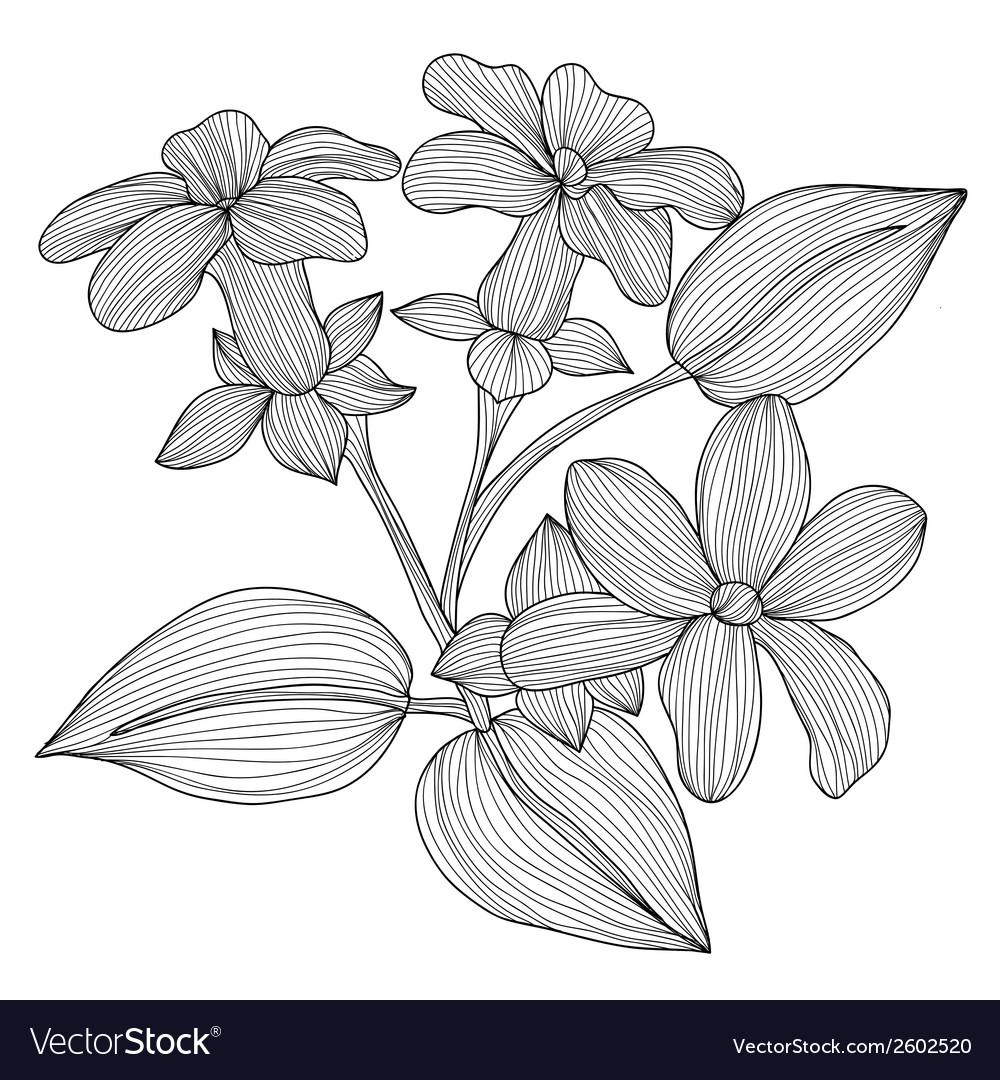 Decorative stephanotis vector | Price: 1 Credit (USD $1)