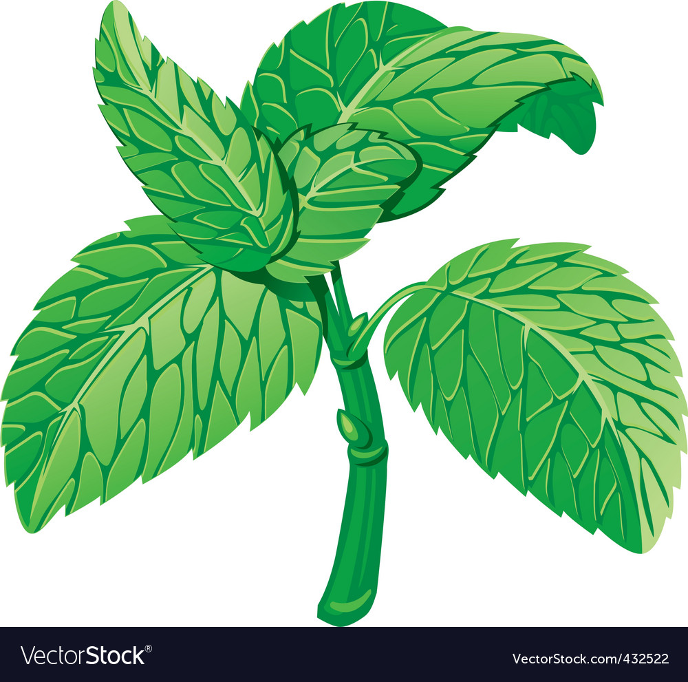 Mint vector | Price: 1 Credit (USD $1)
