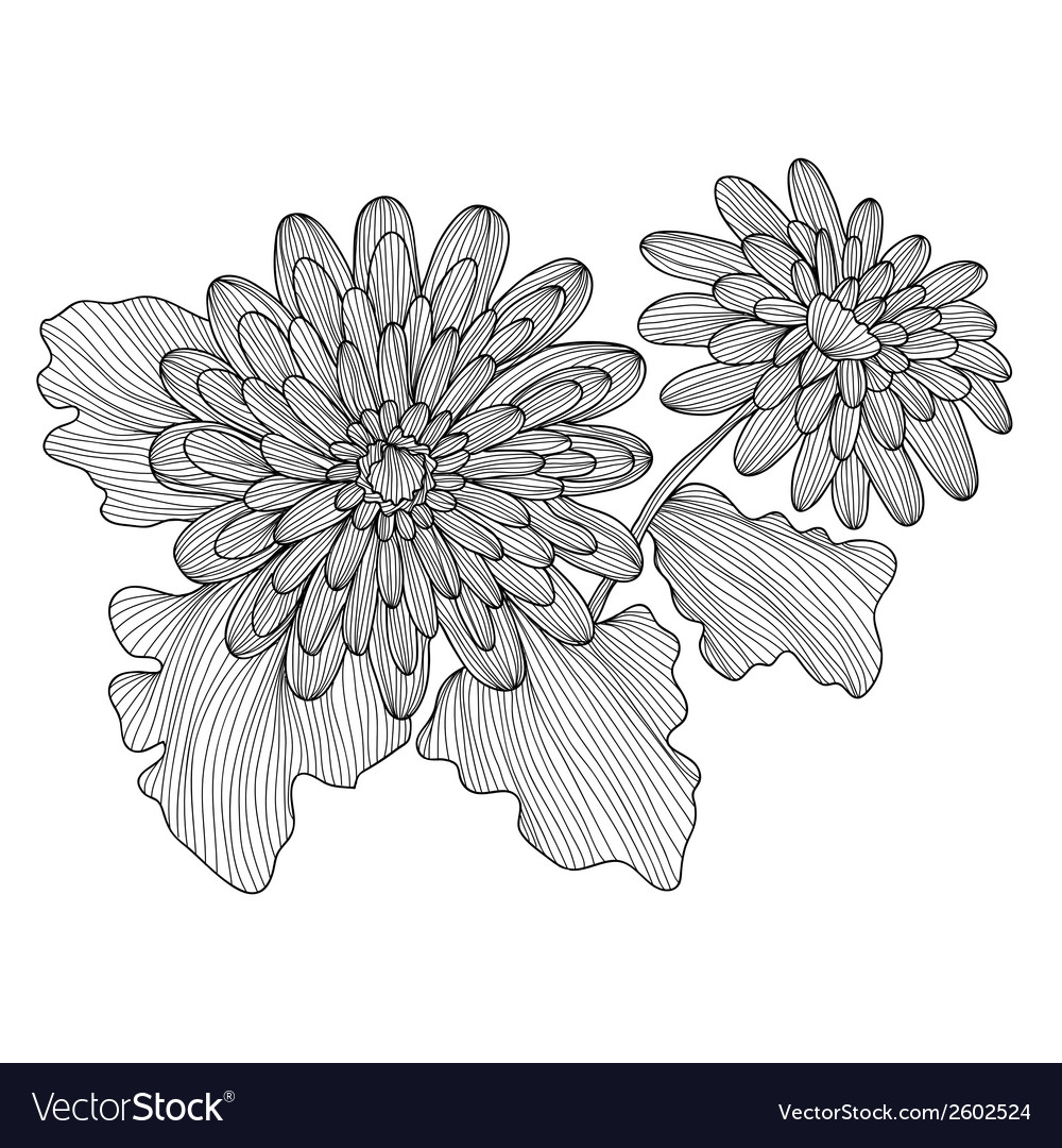Decorative gerbera vector | Price: 1 Credit (USD $1)