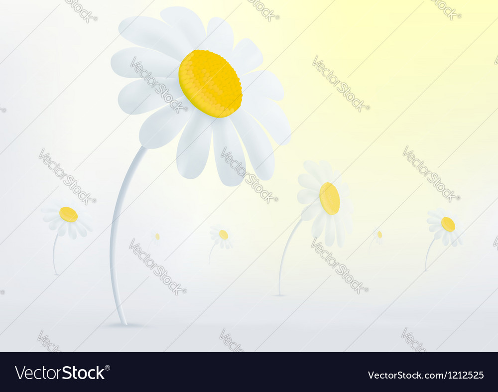 Chamomile flowers in the mist vector | Price: 1 Credit (USD $1)