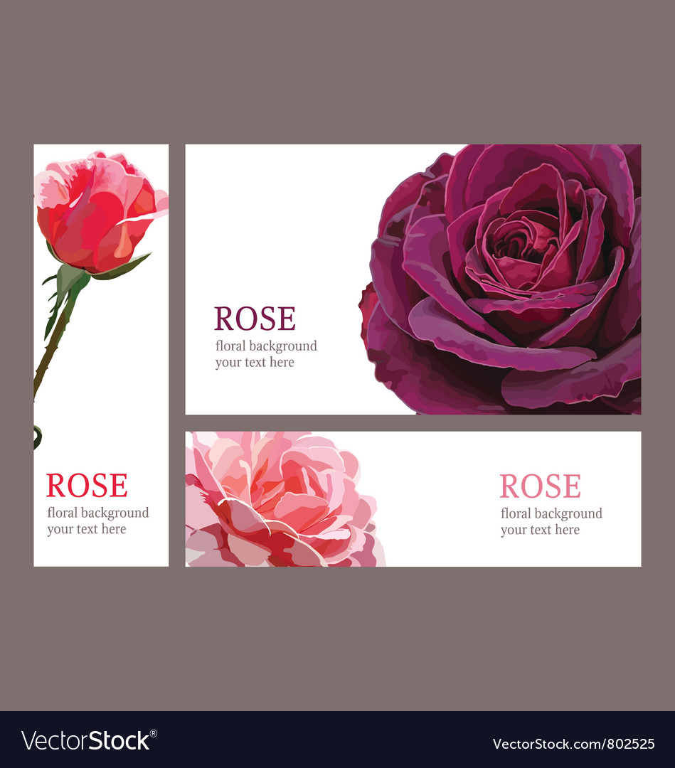 Template cards with roses vector | Price: 1 Credit (USD $1)