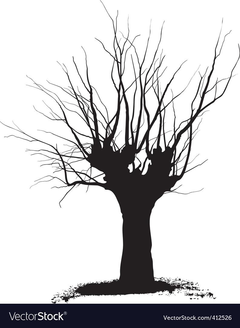 Acacia tree vector | Price: 1 Credit (USD $1)