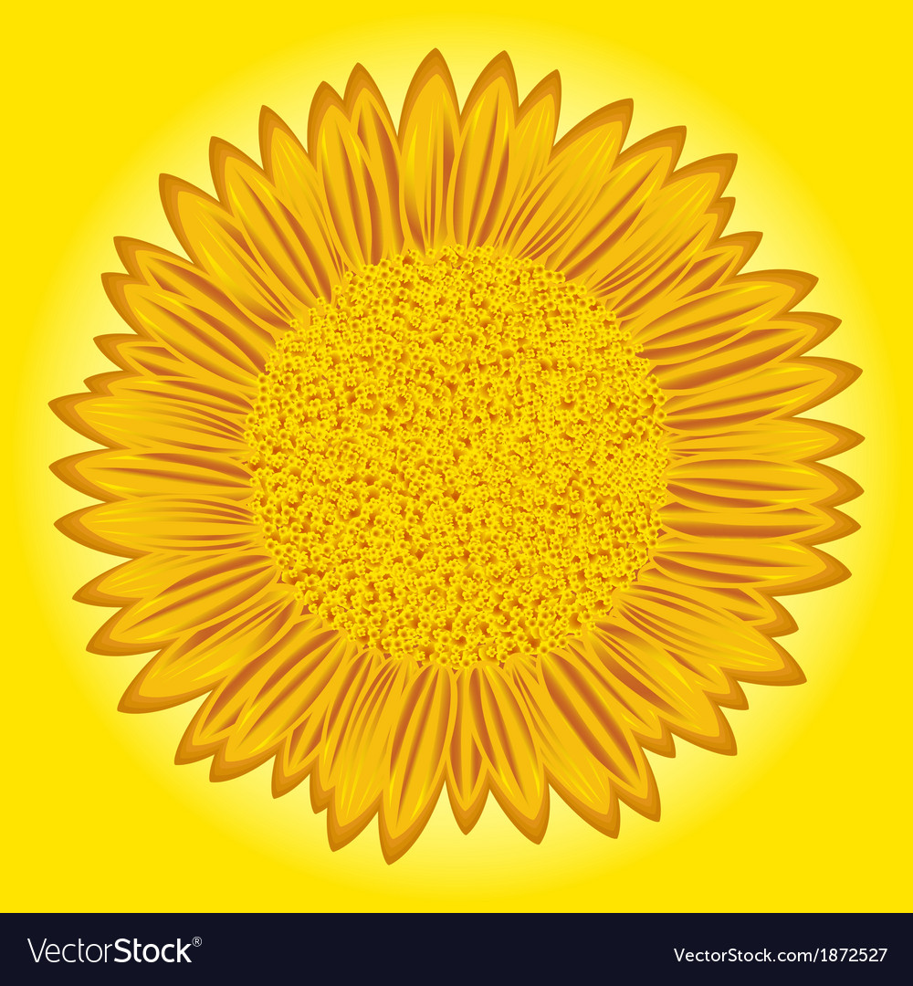 Sunflower detailed vector | Price: 1 Credit (USD $1)