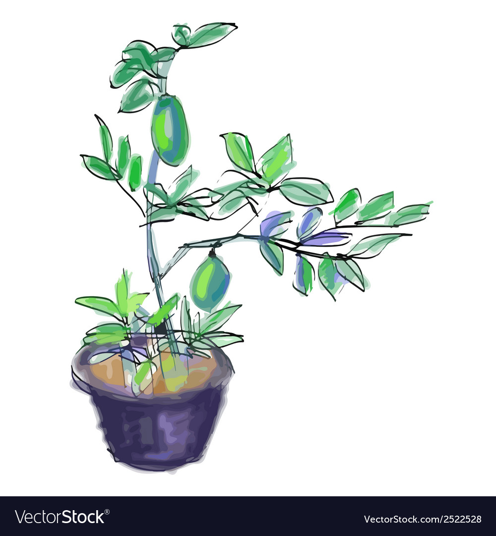 Sketch of lemon tree vector | Price: 1 Credit (USD $1)