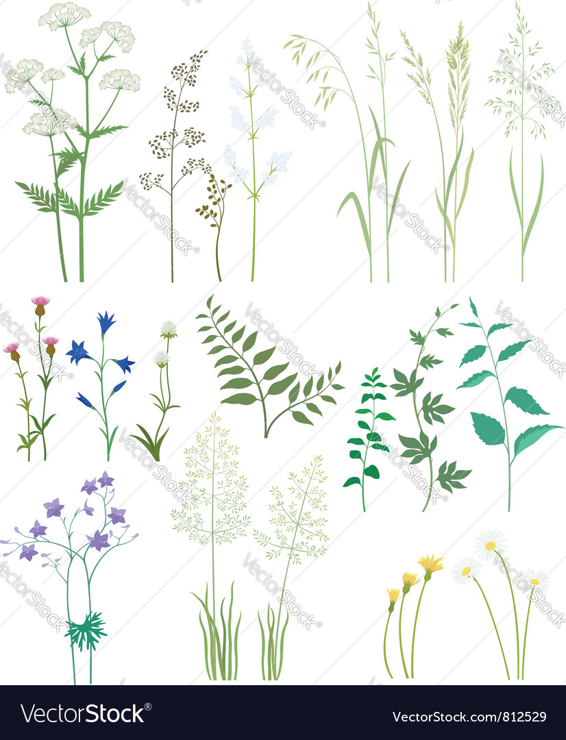 Grass and wild flowers vector | Price: 3 Credit (USD $3)