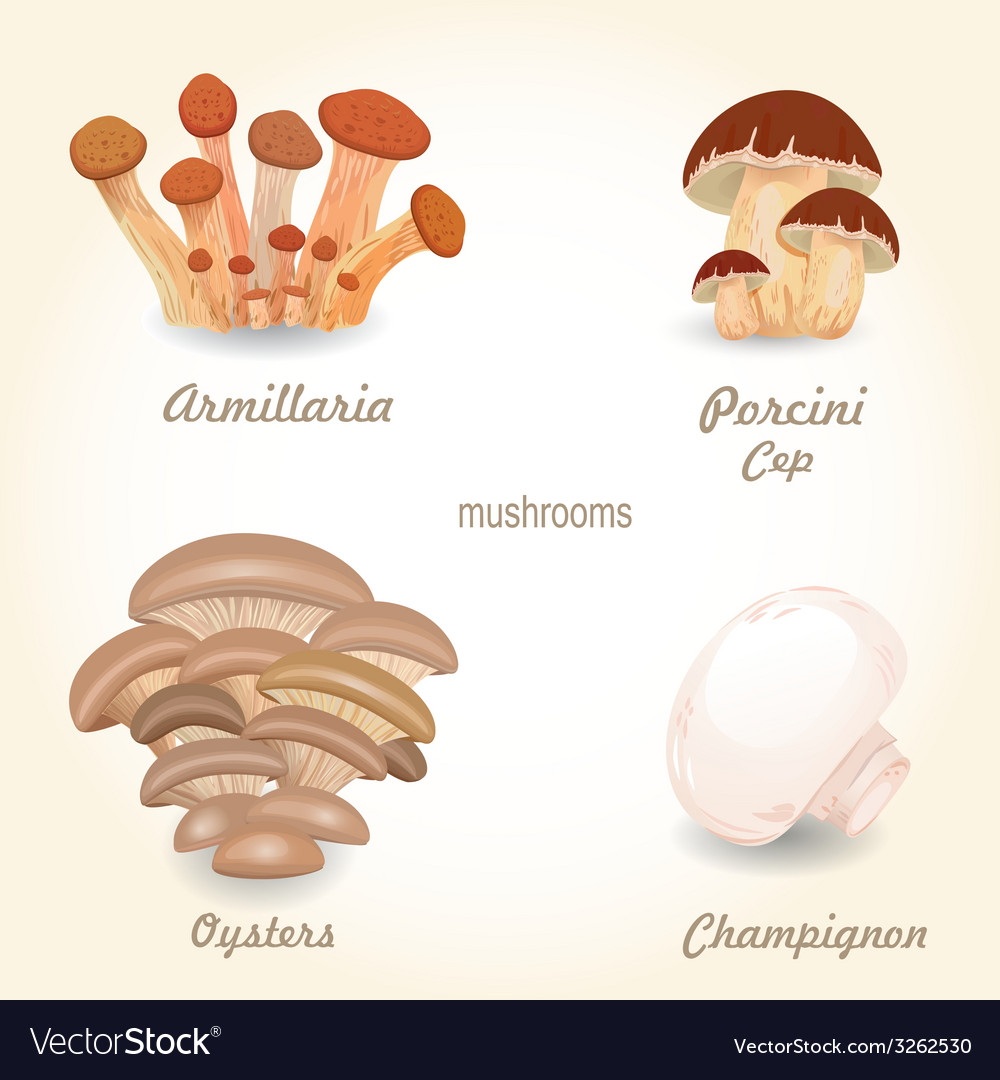 Collection of isolated edible mushrooms for your vector | Price: 1 Credit (USD $1)