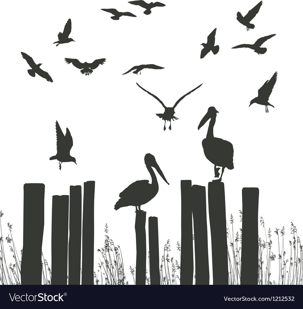 Gulls and pelicans vector | Price: 1 Credit (USD $1)