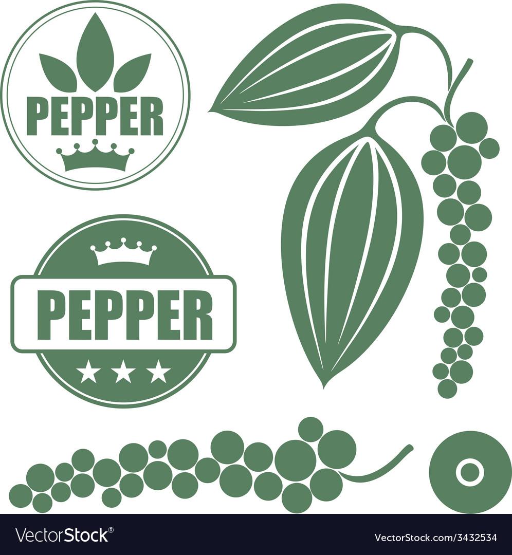 Black pepper vector | Price: 1 Credit (USD $1)