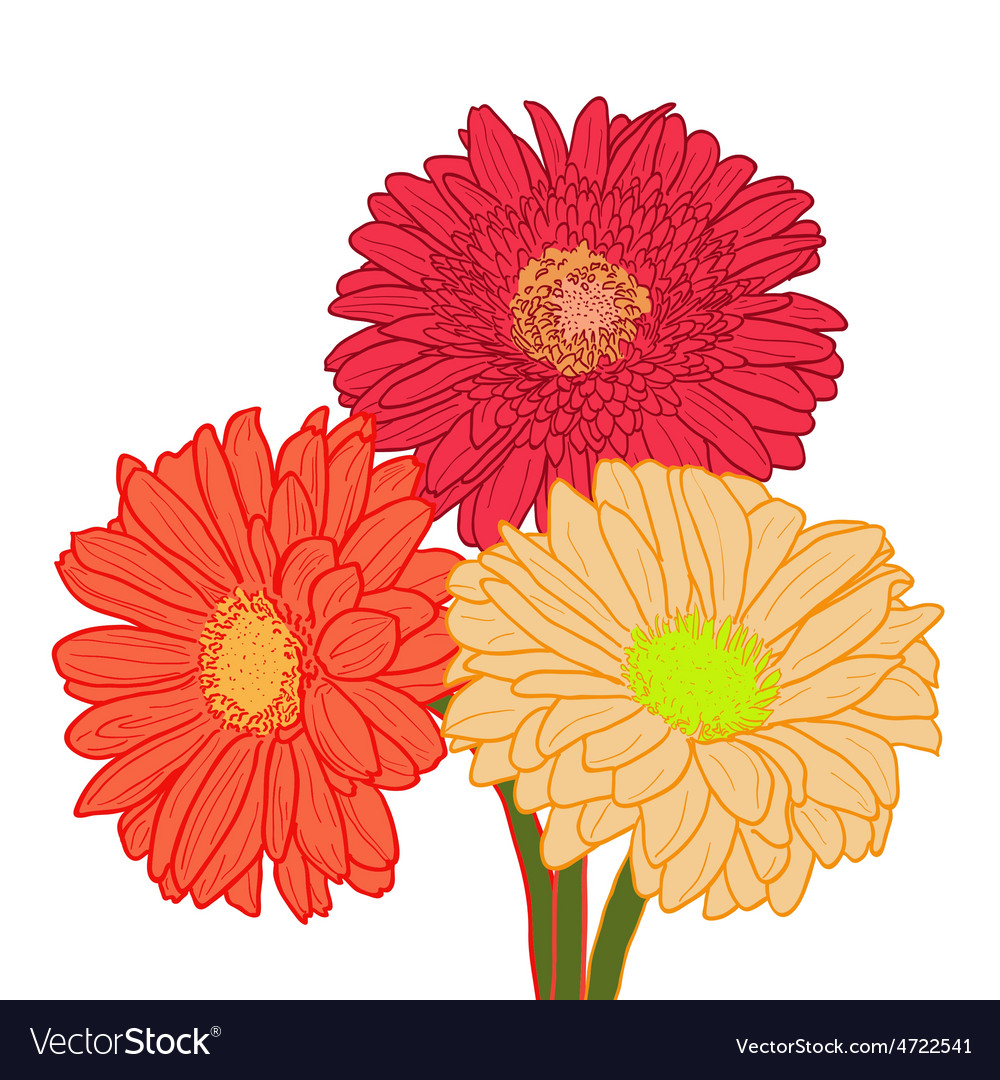 Bouquet of three colorful gerberas hand drawn vector | Price: 1 Credit (USD $1)