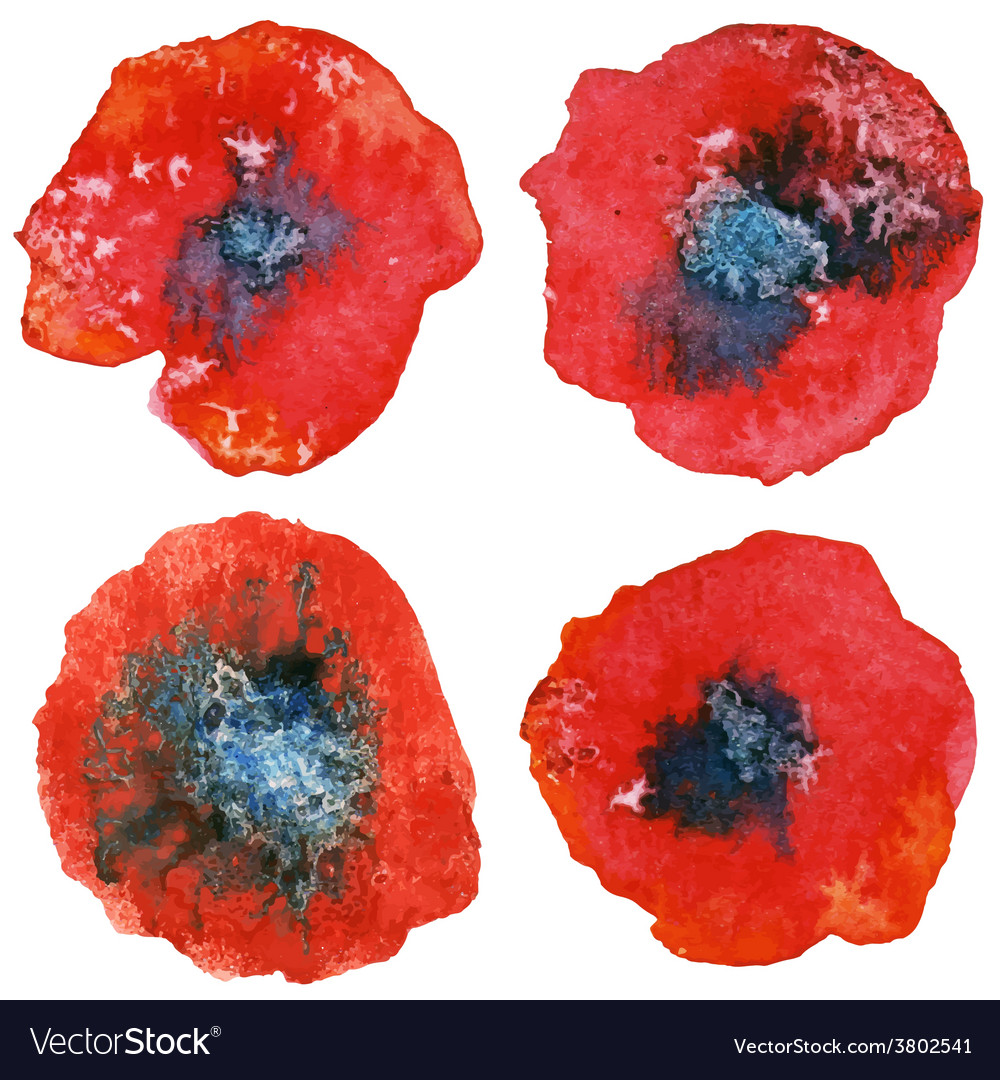 Four stylized watercolor poppy flowers watercolor vector | Price: 1 Credit (USD $1)