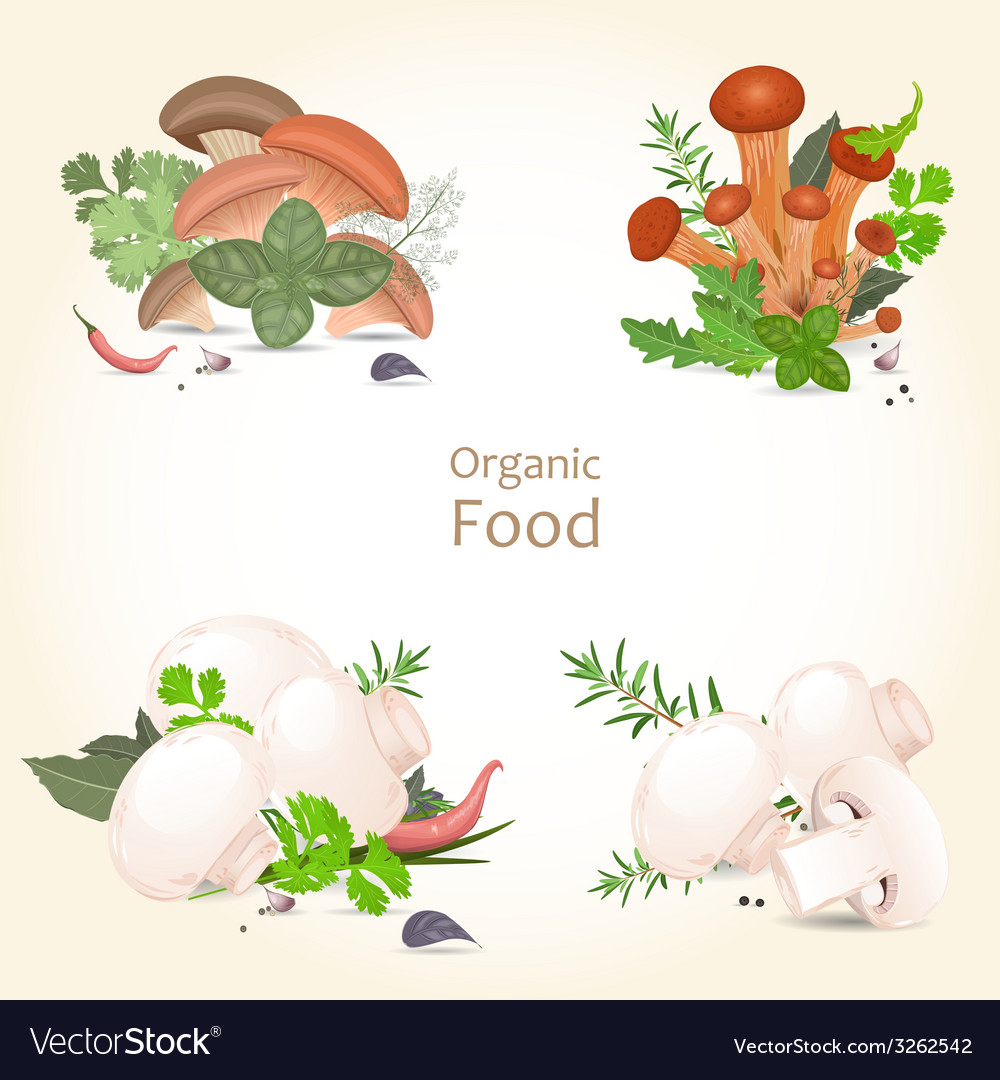 Collection of isolated edible mushrooms with herbs vector | Price: 1 Credit (USD $1)