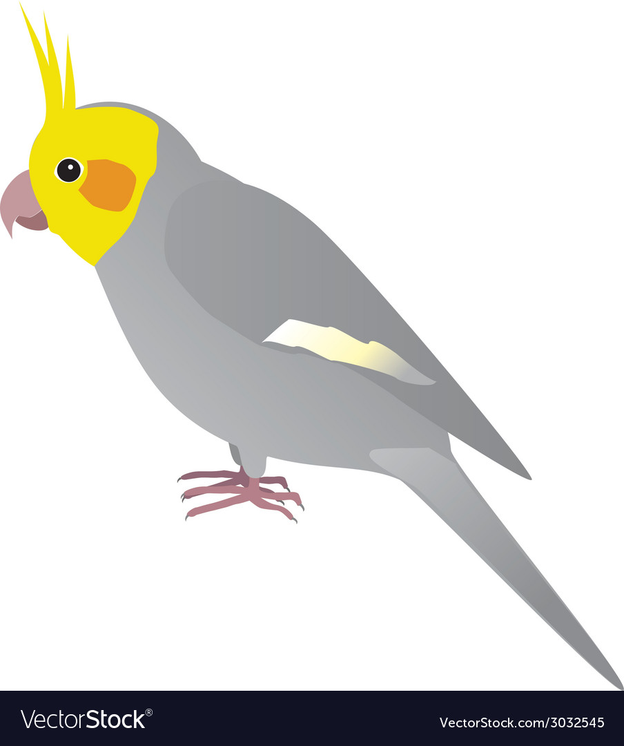 Cockatiel vector | Price: 1 Credit (USD $1)
