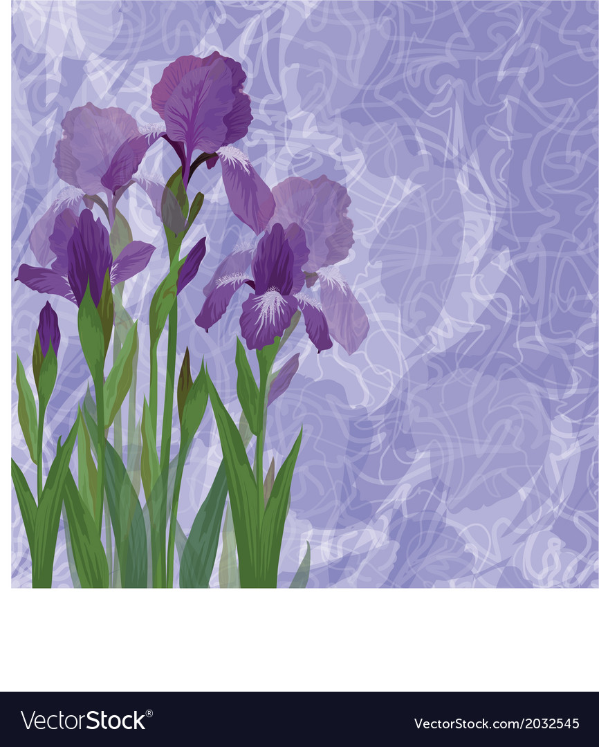 Flowers iris for holiday design vector | Price: 1 Credit (USD $1)