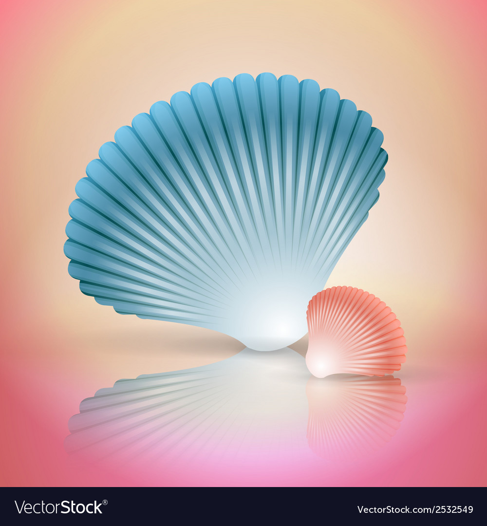 Big and small seashells vector | Price: 1 Credit (USD $1)