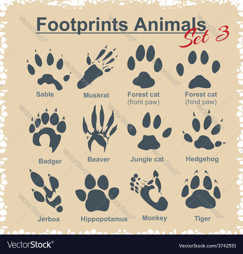 Footprints animals  set vector