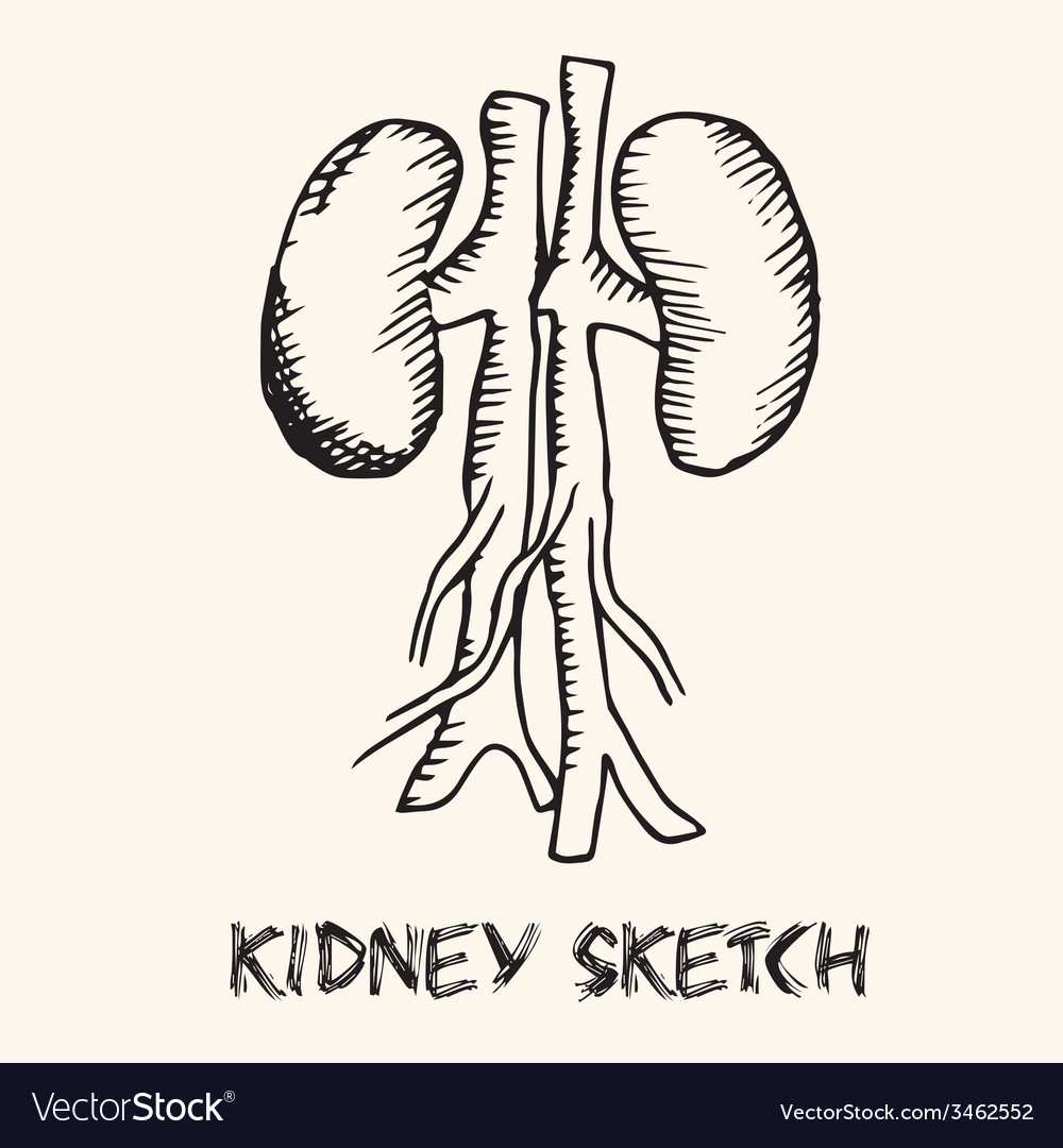 Human organs in sketches style set backgrou vector   Price: 1 Credit (USD $1)