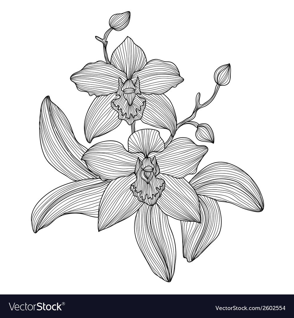 Decorative orchid vector | Price: 1 Credit (USD $1)