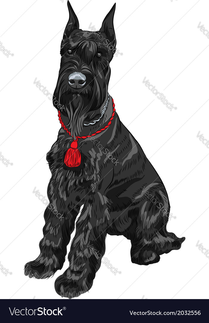 Dog breed giant schnauzer color black vector | Price: 1 Credit (USD $1)