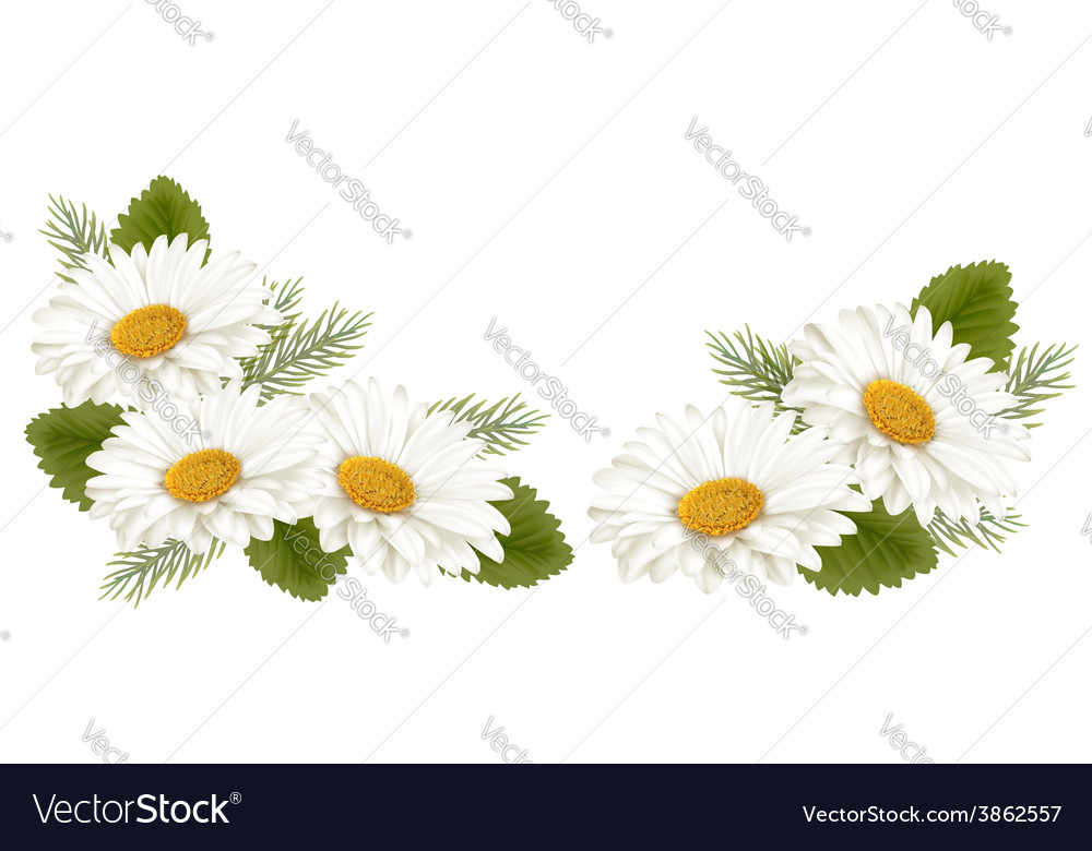 Nature background with white beautiful flowers vector | Price: 3 Credit (USD $3)