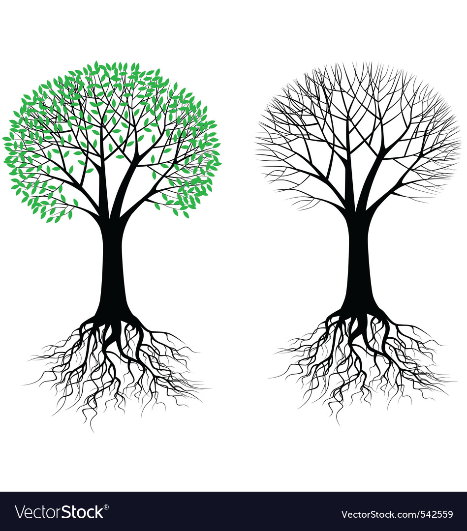 Tree and root vector | Price: 1 Credit (USD $1)