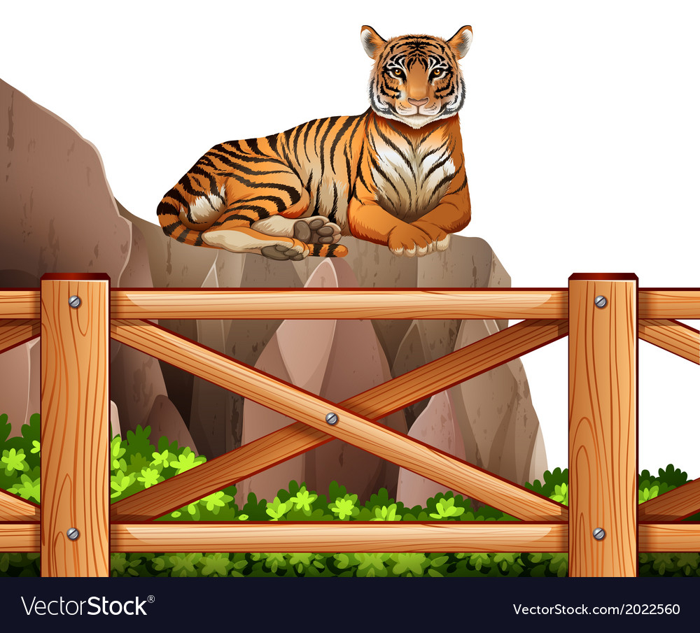 A tiger above the cliff vector   Price: 3 Credit (USD $3)