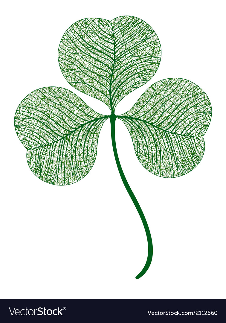 Leaf clover isolated macro vector | Price: 1 Credit (USD $1)