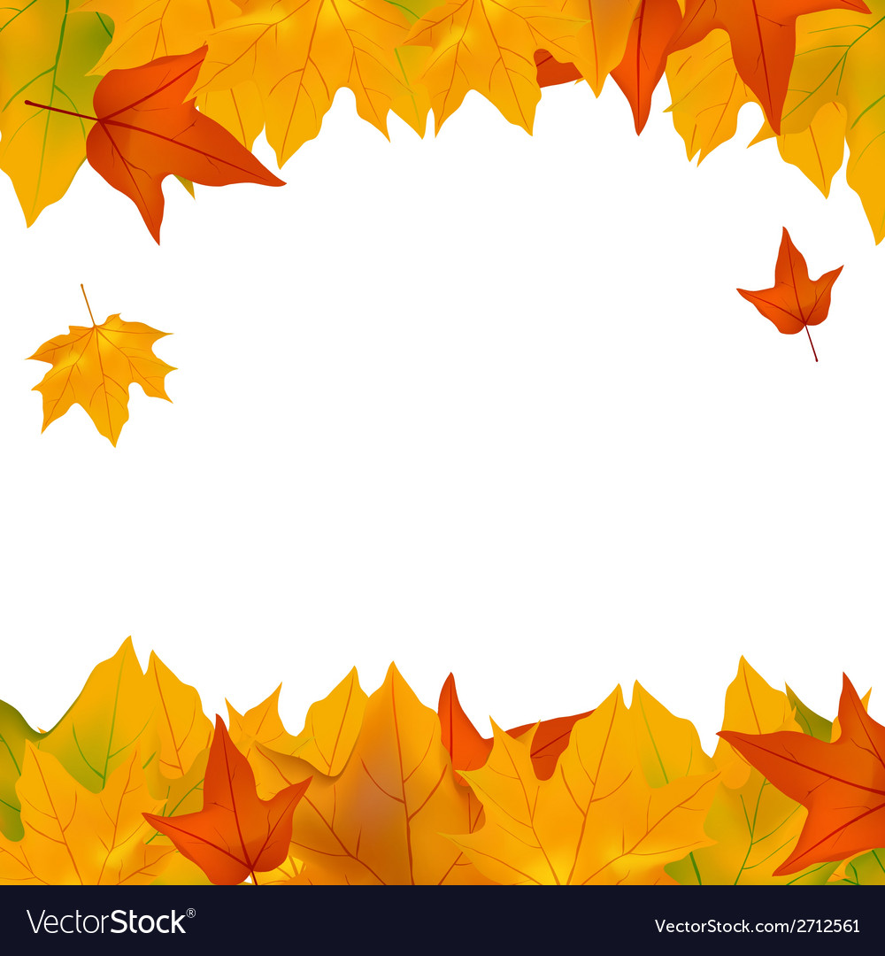 Foliage plants leaves background maple maple leaf vector | Price: 1 Credit (USD $1)
