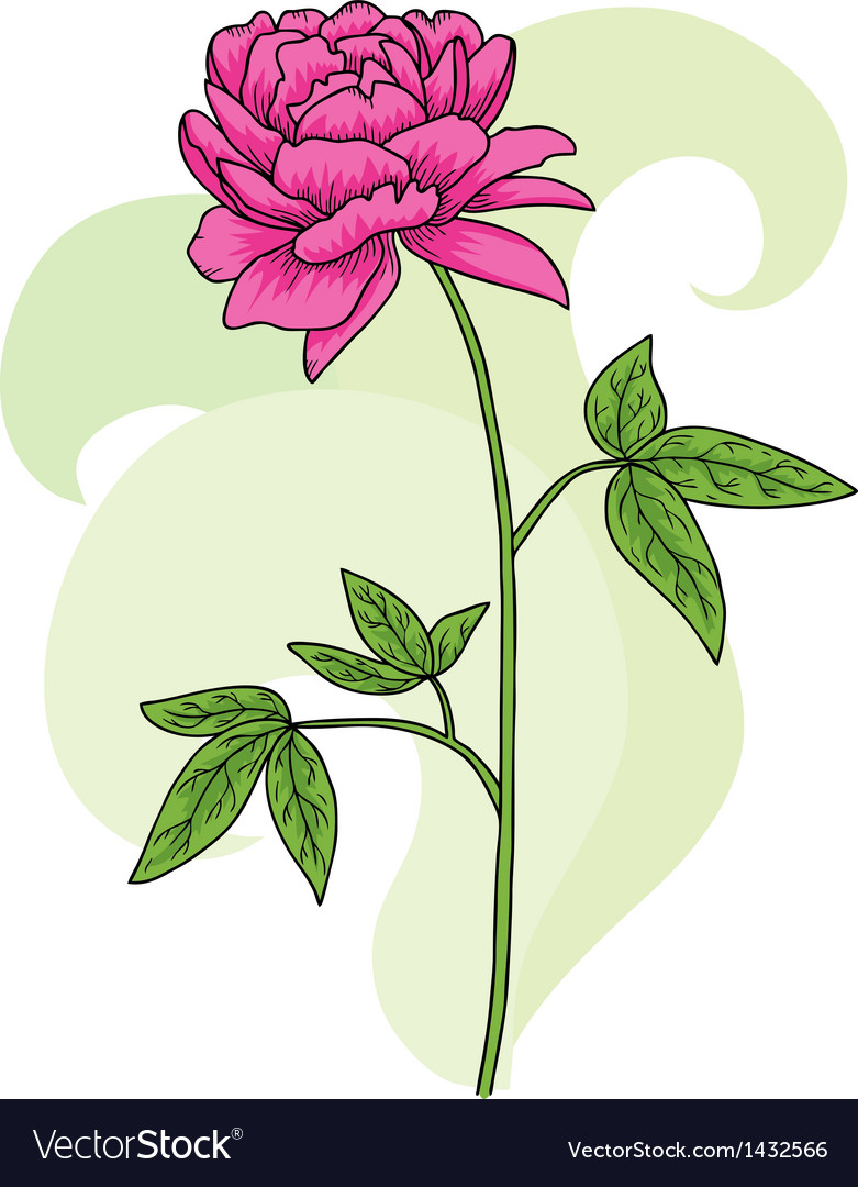 Floral pink peony card vector | Price: 1 Credit (USD $1)