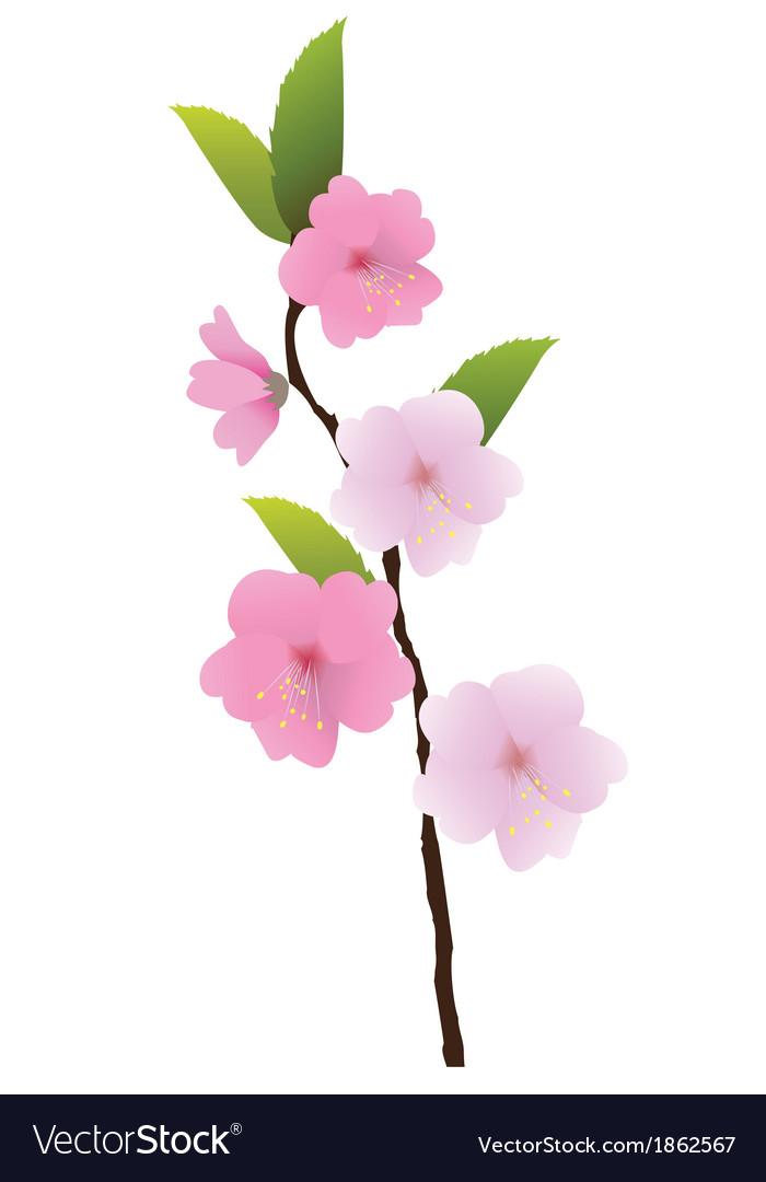 Floral branch vector | Price: 1 Credit (USD $1)