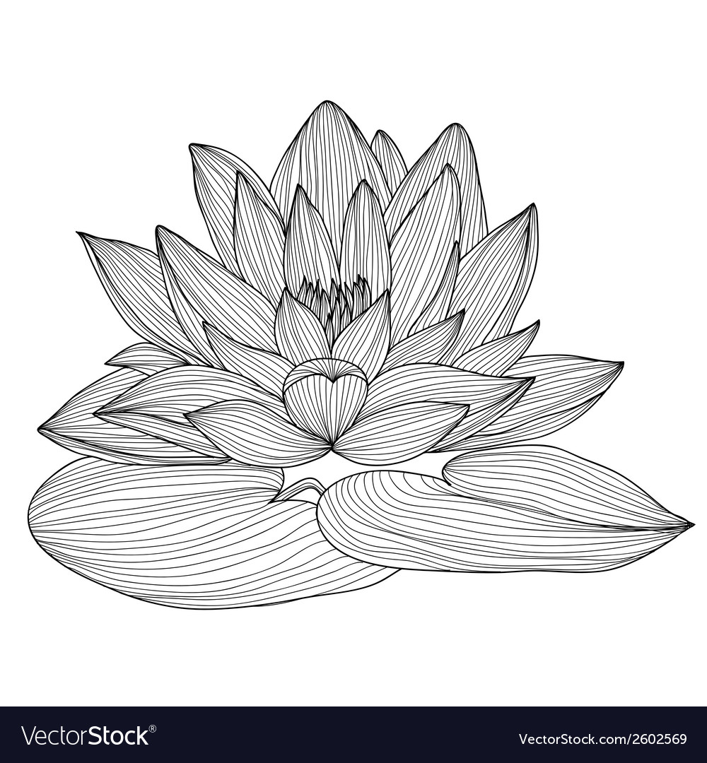 Decorative lotus vector | Price: 1 Credit (USD $1)