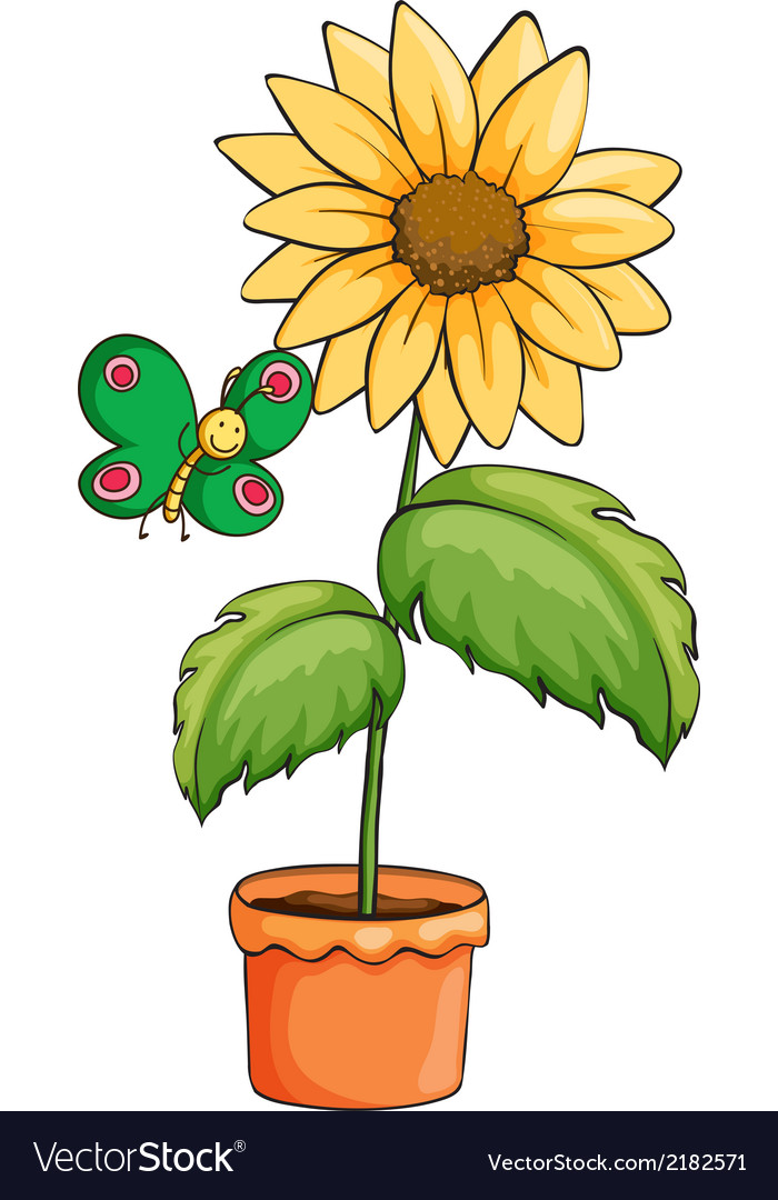 A pot with a sunflower vector | Price: 1 Credit (USD $1)